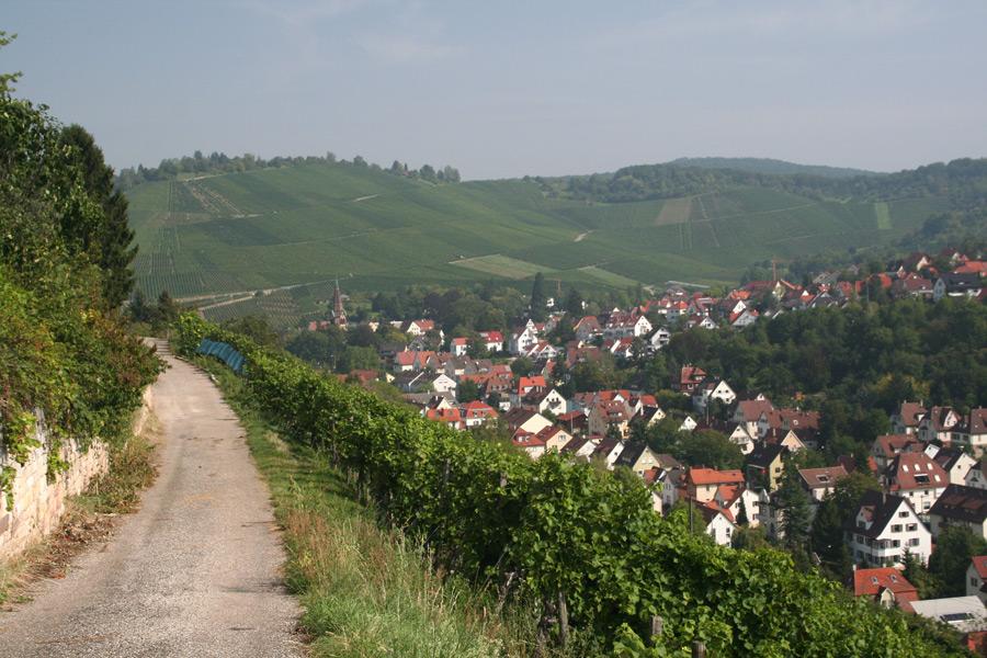 Weinberge bei Stuttgart